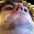 avatar for ukogmonkey