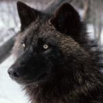 View werewindwolf's Profile
