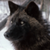View werewindwolf's Profile