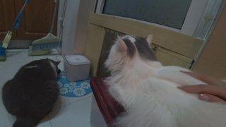 stream with my mom! !bento