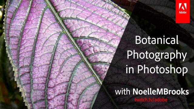 Botanical Photography in Adobe Photoshop with NoelleMBrooks