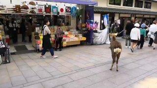 Highlight: [JAPAN] Nara. Deer. Exploring.