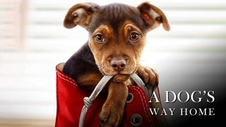 Download A Dog's Way Home - English Subtitle [2019]